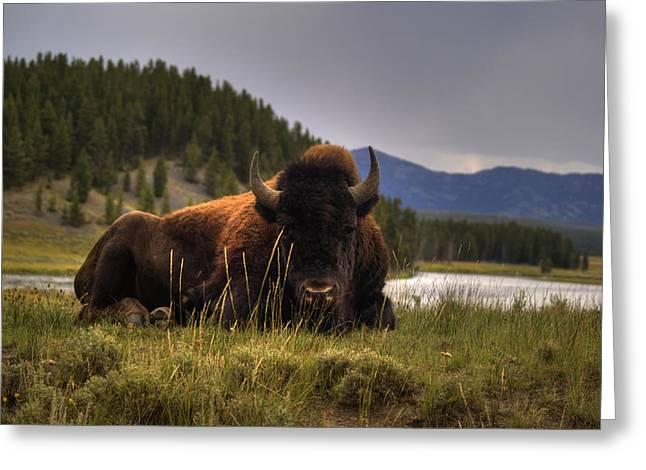 Bison Greeting Card by Patrick  Flynn