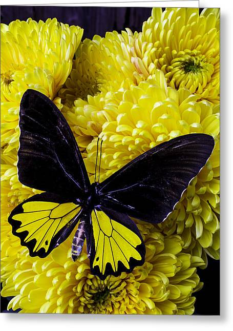 Black And Yellow Butterfly Greeting Card by Garry Gay