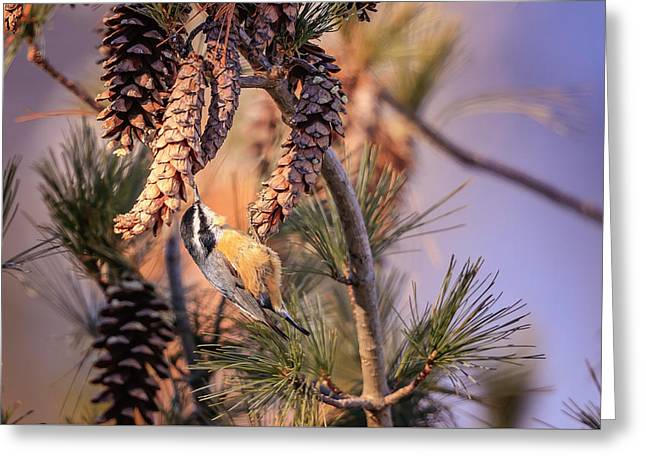 Greeting Card featuring the photograph Black-capped Chickadee by Peter Lakomy