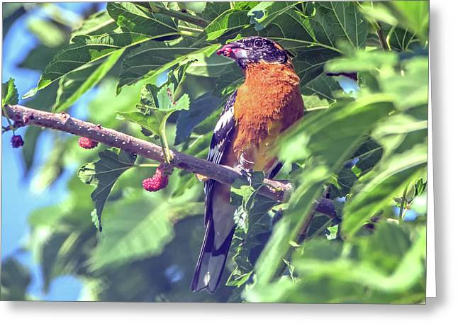 Black-faced Grosbeak Greeting Card by Tam Ryan