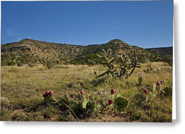 Black Mesa Cacti Greeting Card by Charles Warren
