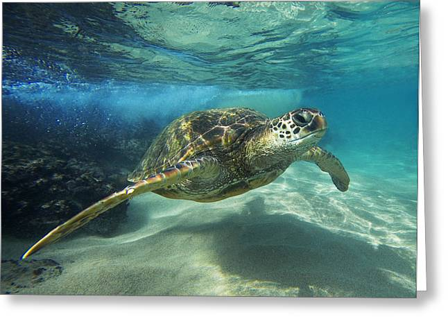 Black Rock Turtle Greeting Card