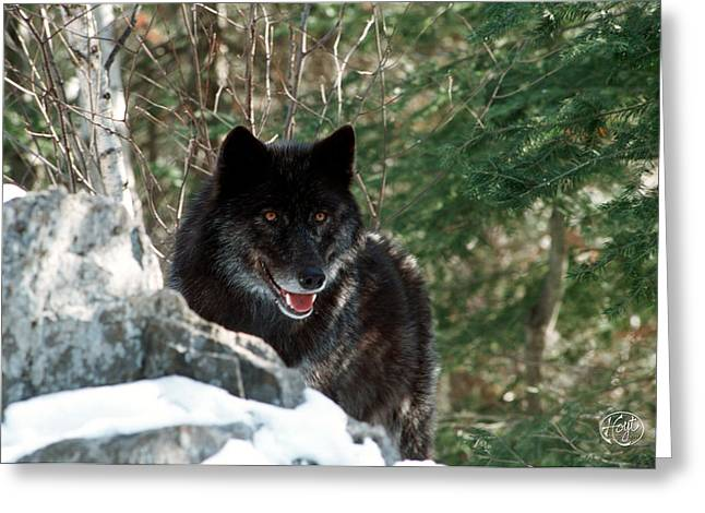 Black Wolf Greeting Card by Brad Hoyt