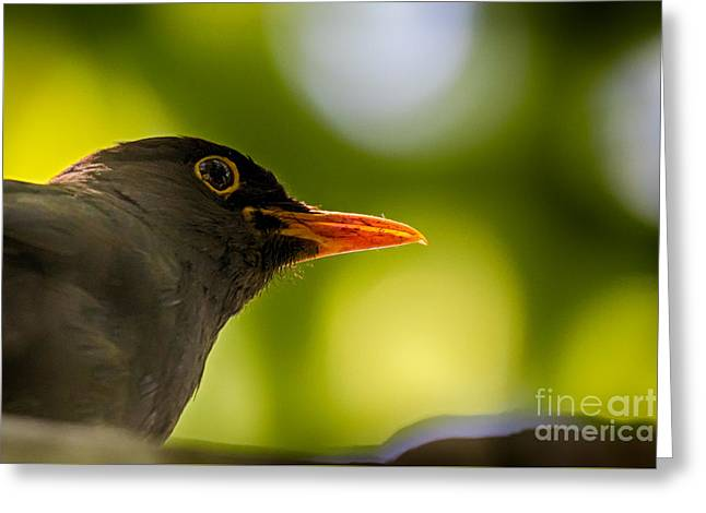 Blackbird Greeting Card by Jivko Nakev