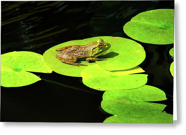 Blending In Greeting Card by Greg Fortier