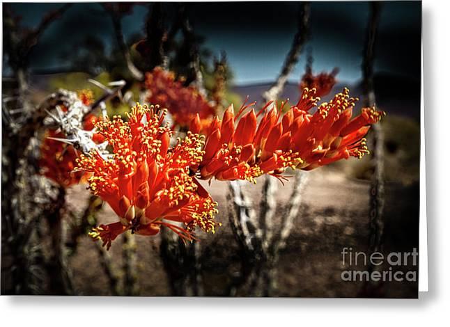 Blooming Ocotillo Greeting Card by Robert Bales
