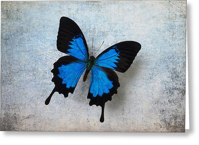 Blue Butterfly Resting Greeting Card by Garry Gay
