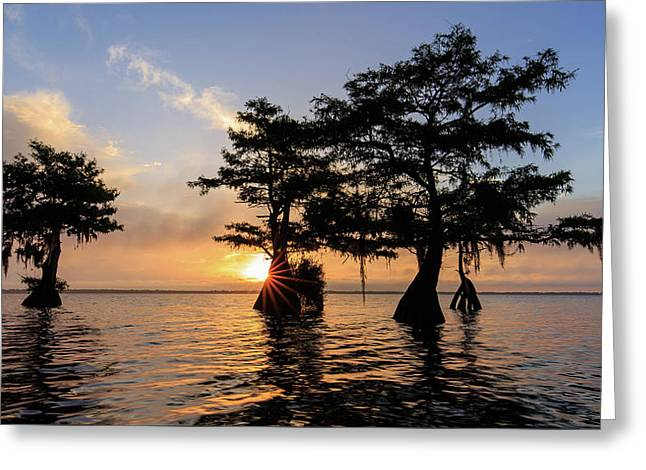 Blue Cypress Lake Morning Greeting Card
