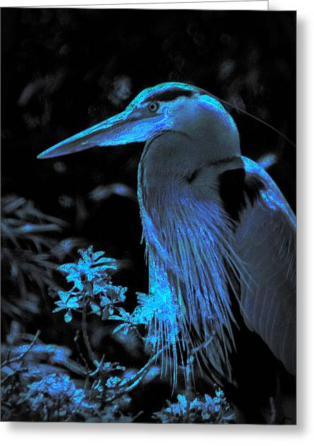 Greeting Card featuring the photograph Blue Heron by Lori Seaman