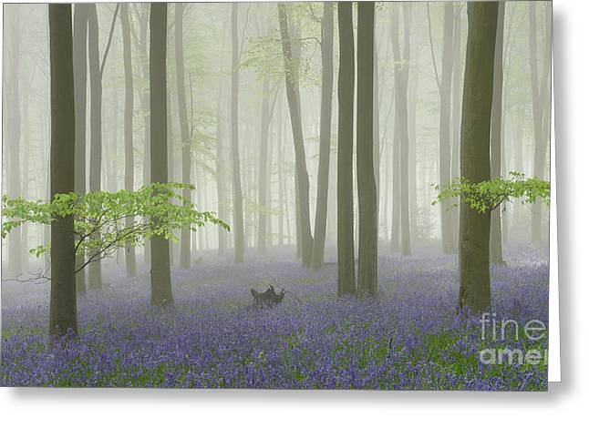 Bluebell Mist I Greeting Card by Richard Thomas