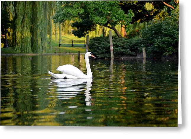 Boston Public Garden Swan Green Reflection Greeting Card by Toby McGuire