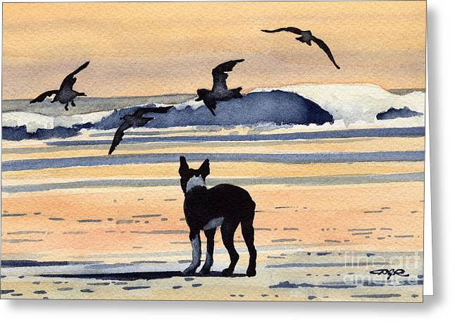 Boston Terrier Sunset Greeting Card by David Rogers