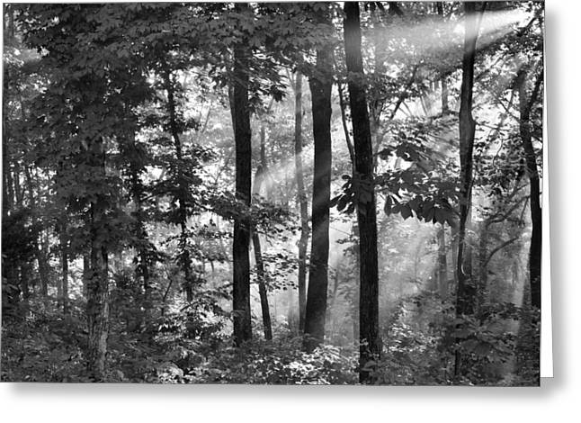 Breaking Through The Canopy Greeting Card by Kristin Elmquist