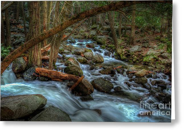 Bridalveil Creek In Shady Forest In Yosemite Greeting Card by Terry Garvin