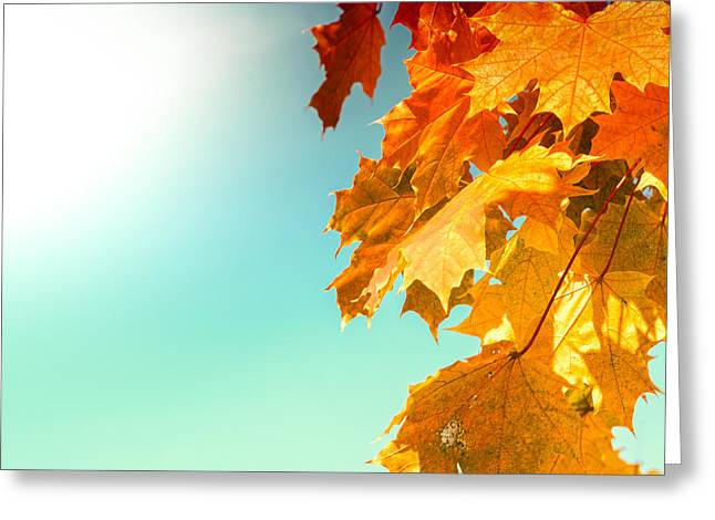 Yellow Autumn White Sun Greeting Card