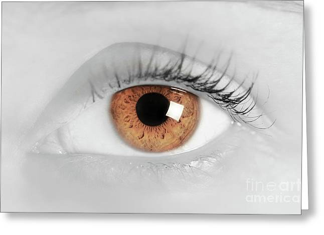 Brown Eye Of A Young Woman. Close-up. Focus On Iris Greeting Card by Michal Bednarek