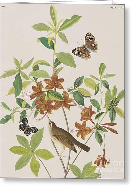 Brown Headed Worm Eating Warbler Greeting Card by John James Audubon