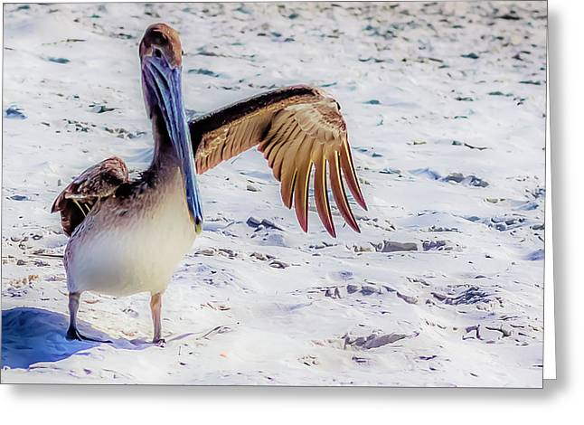 Brown Pelican Wave Greeting Card