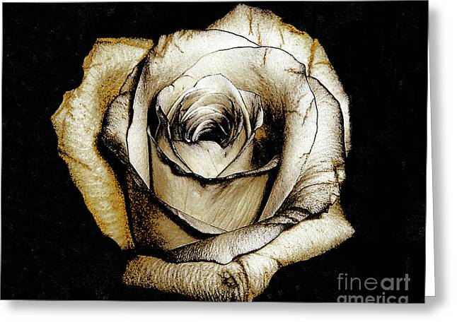 Greeting Card featuring the photograph Brown Rose - Digital Painting by Merton Allen