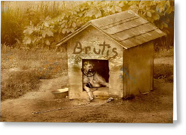 Brutis Greeting Card