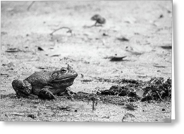 Greeting Card featuring the photograph Bull Frog by Jason Smith