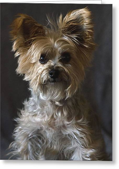 Greeting Card featuring the photograph Buster by Irina ArchAngelSkaya