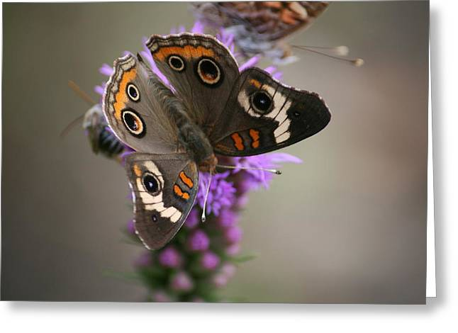 Greeting Card featuring the photograph Buckeye Butterfly by Cathy Harper