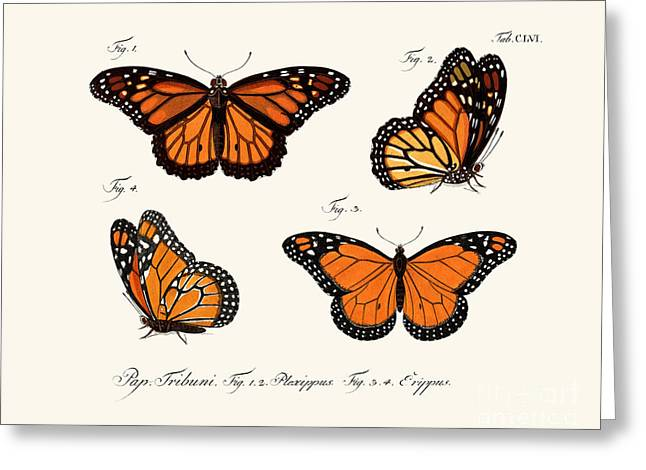 Butterflies Greeting Card by German School
