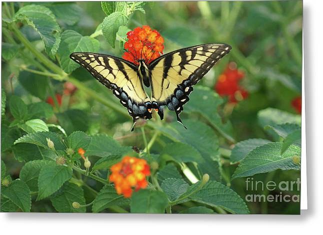 Greeting Card featuring the photograph Butterfly And Flower by Debra Crank