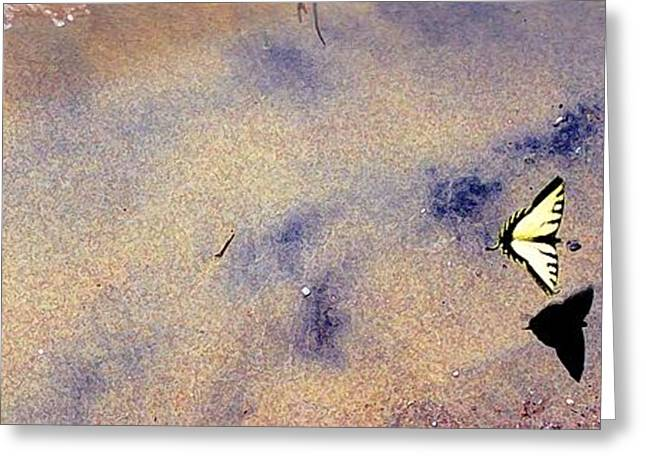 Greeting Card featuring the photograph Butterfly And Sand 42 Db by Lyle Crump