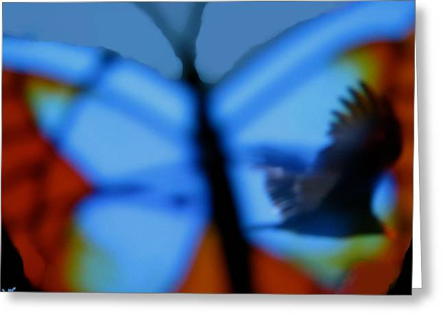 Butterfly Birds Collection  Greeting Card by Debra     Vatalaro