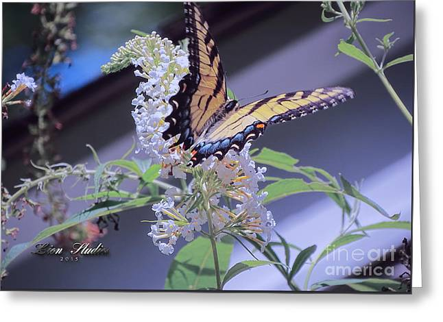 Butterfly Bush ,butterfly Included Greeting Card