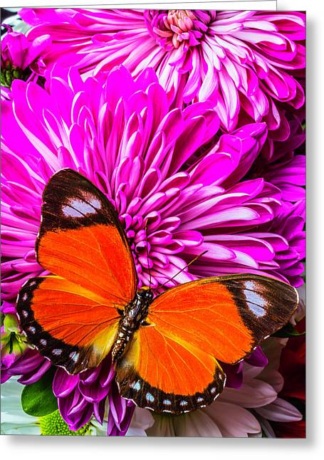 Butterfly On Pink Mums Greeting Card