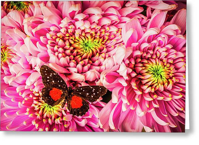 Butterfly On Spider Mums Greeting Card