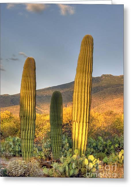 Cactus Desert Landscape Greeting Card by Juli Scalzi