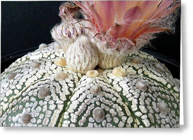 Cactus Flower 6 Greeting Card