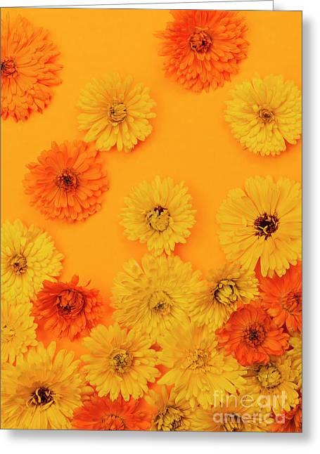 Calendula Flowers On Orange Background Greeting Card by Elena Elisseeva