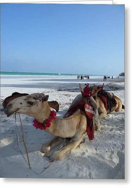 Camel On Beach Kenya Wedding Greeting Card