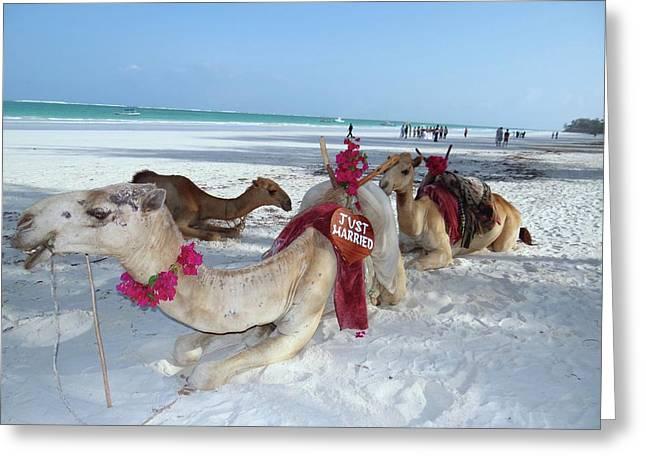 Camel On Beach Kenya Wedding4 Greeting Card