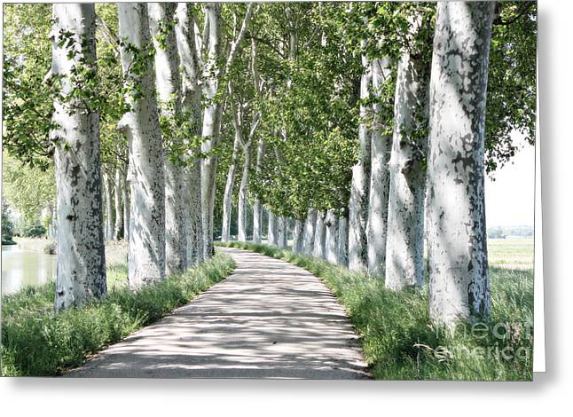 Canal Du Midi Greeting Card by Cendrine Marrouat