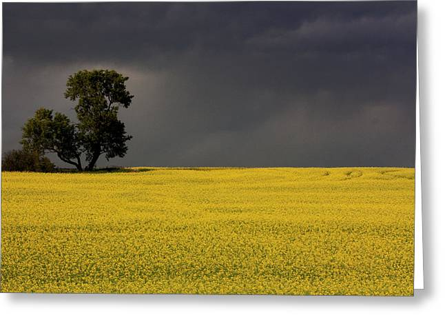 Canola Storm Greeting Card