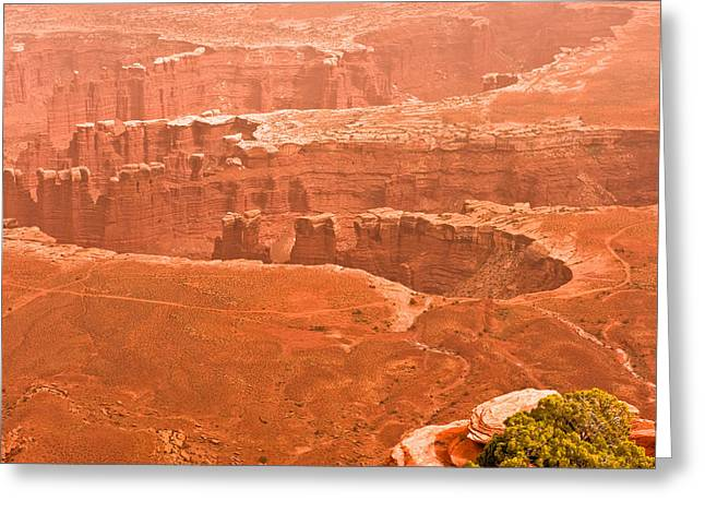 Canyonland N.p. Greeting Card by Larry Gohl
