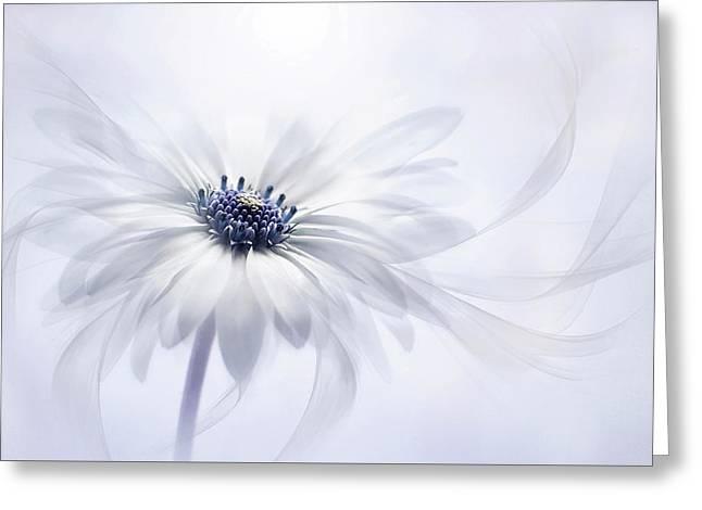 Cape Daisy Greeting Card