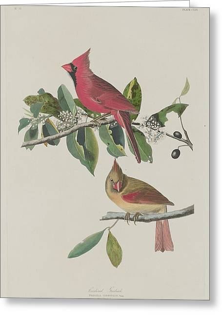 Cardinal Grosbeak Greeting Card