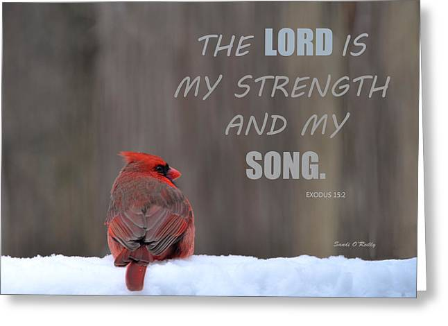 Cardinal In The Snowstorm With Scripture Greeting Card by Sandi OReilly