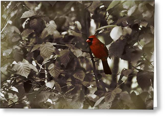 Very Red Cardinal Greeting Card by JAMART Photography