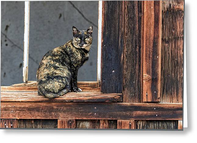 Cat In A Window Greeting Card