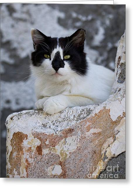 Cat On The Stairs, Greece Greeting Card