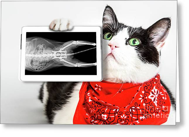 Cat With X Ray Plate Greeting Card