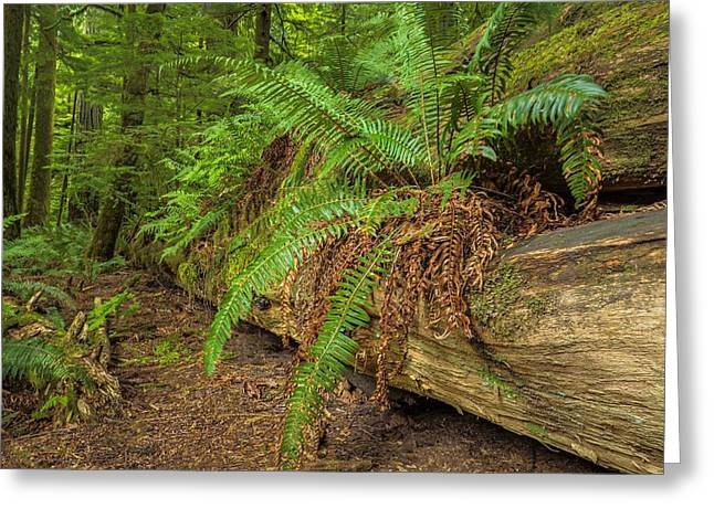 Cathedral Grove Greeting Card by Jacqui Boonstra